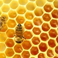 Méhek munka közben