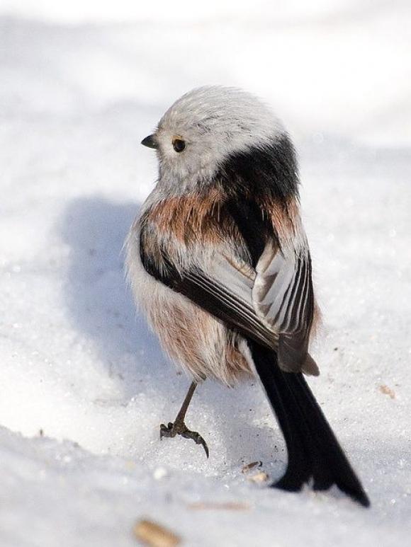 Madár a hóban